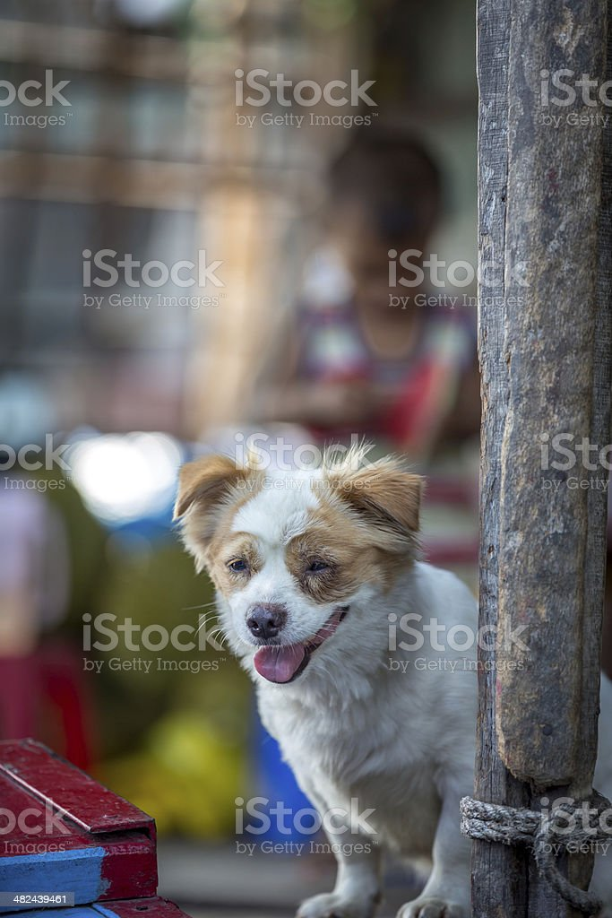Puppy dog at floating market, Mekong Delta, Vietnam stock photo