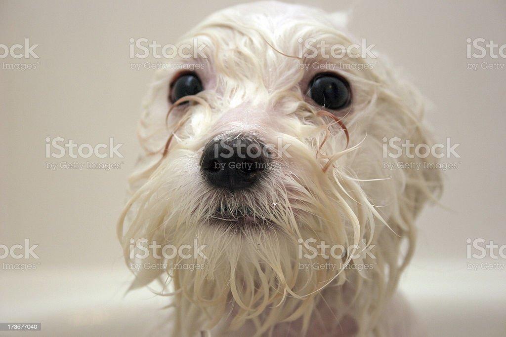 Puppy dog Bath stock photo