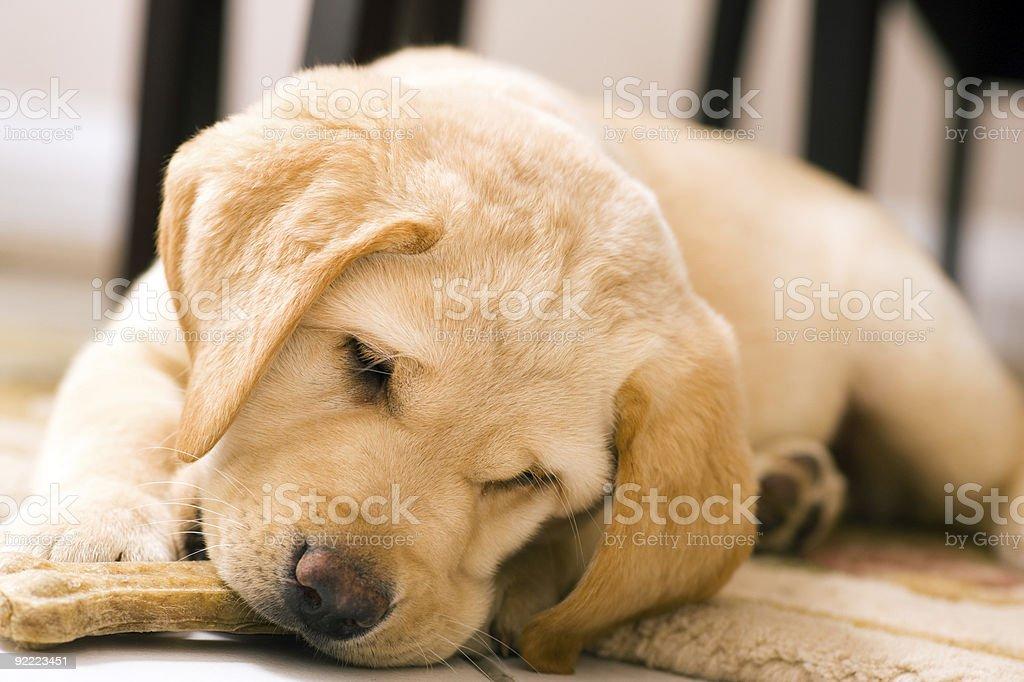 Puppy dog eating stock photo