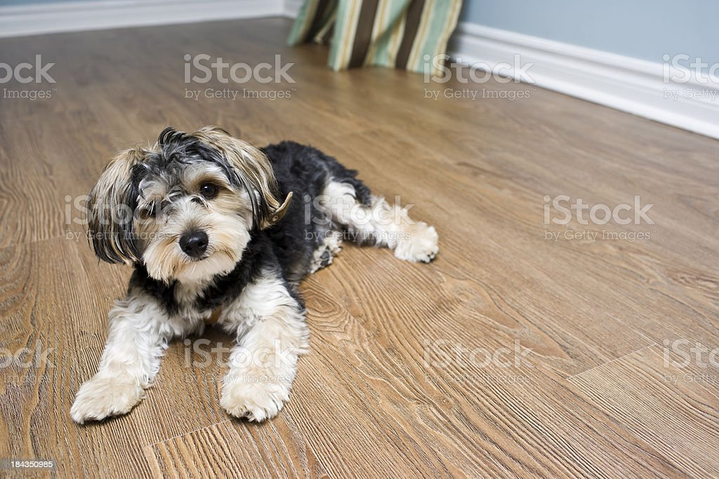 Puppy Dog royalty-free stock photo
