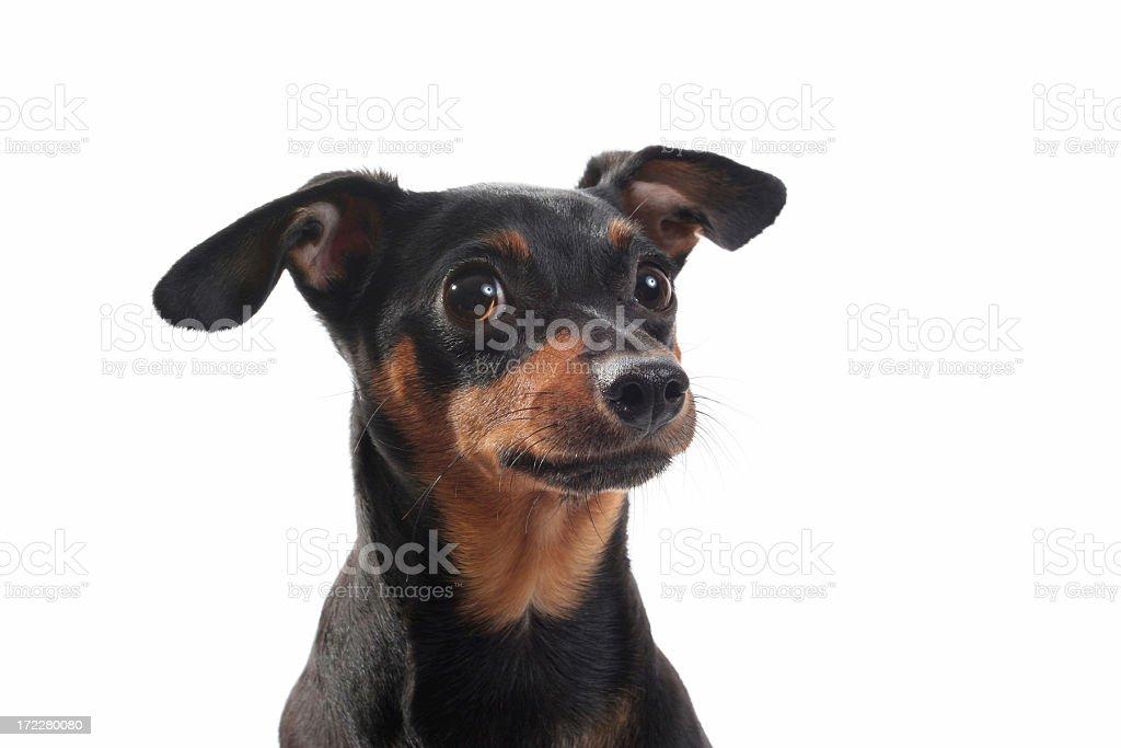 Puppy Doo stock photo