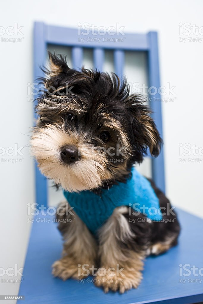 Puppy Face stock photo