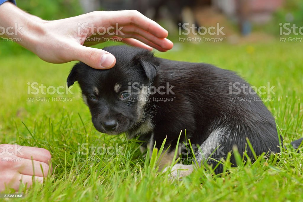 puppy falls asleep in reliable hands stock photo