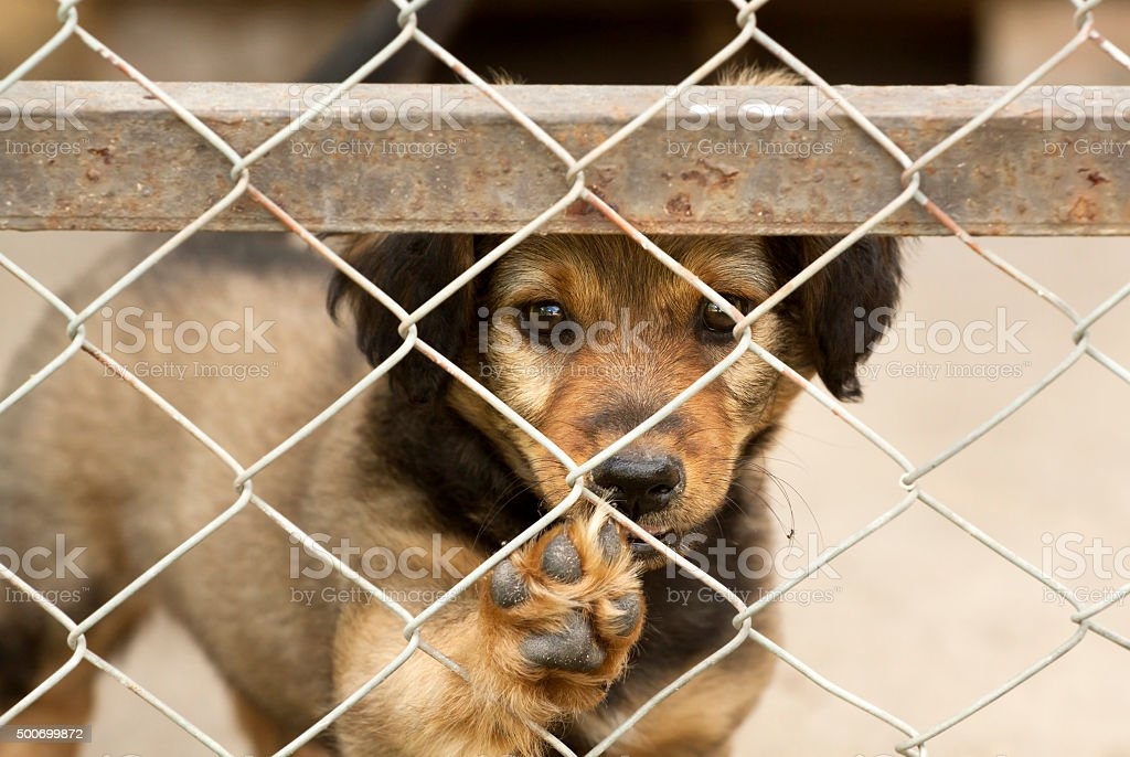Puppy giving paw stock photo
