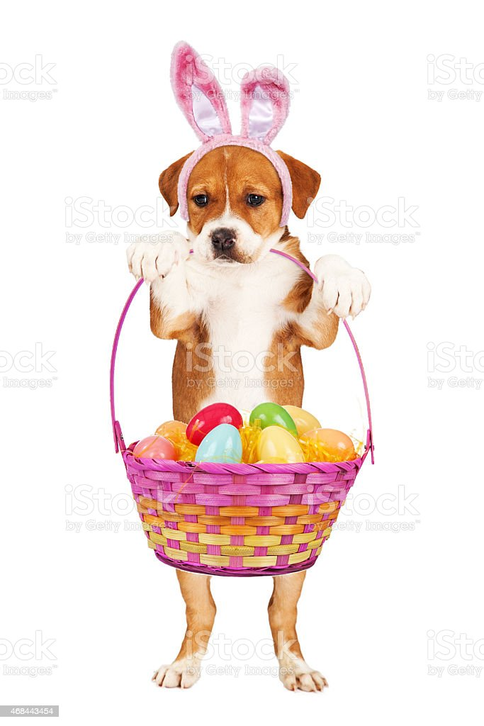 Puppy Holding Easter Basket stock photo