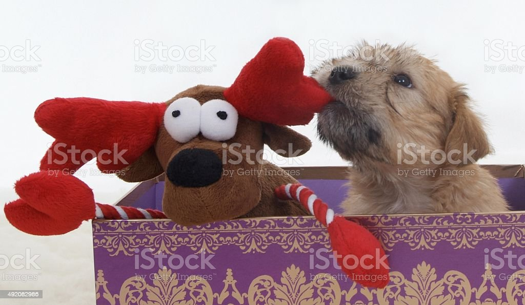 Puppy in a Christmas Box with Reindeer stock photo