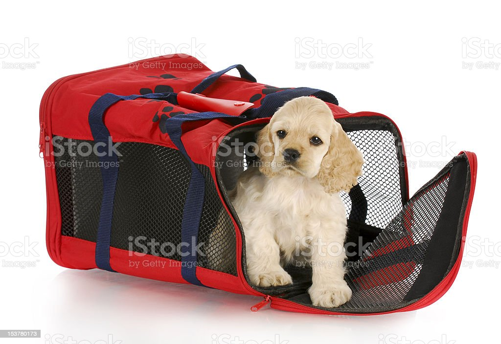 puppy in a dog crate bag royalty-free stock photo