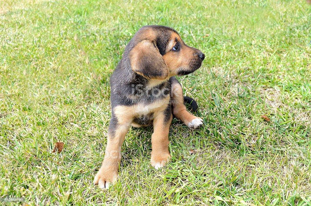 puppy in a garden stock photo