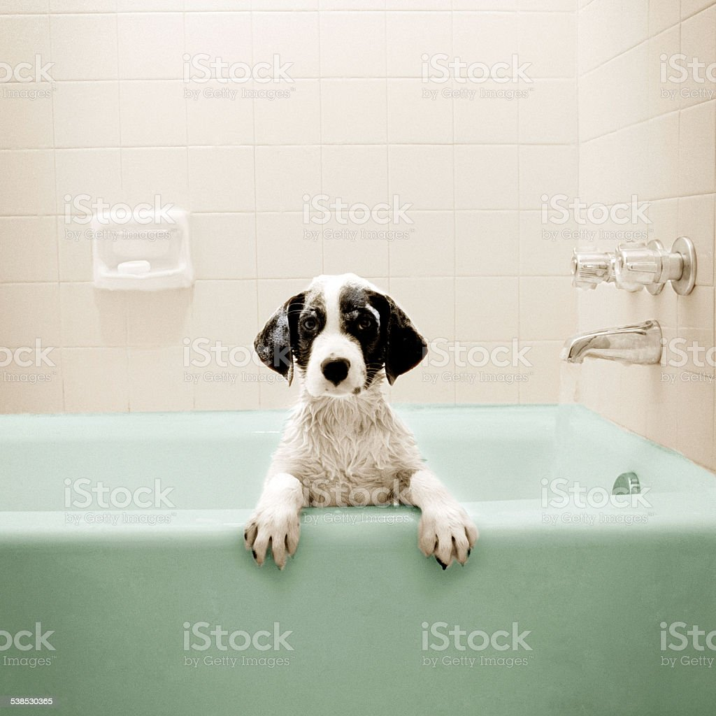 Puppy in Bathtub stock photo