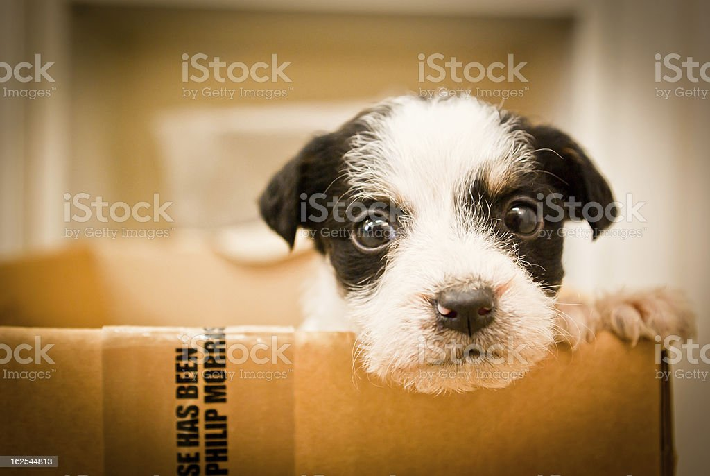 Puppy in box stock photo