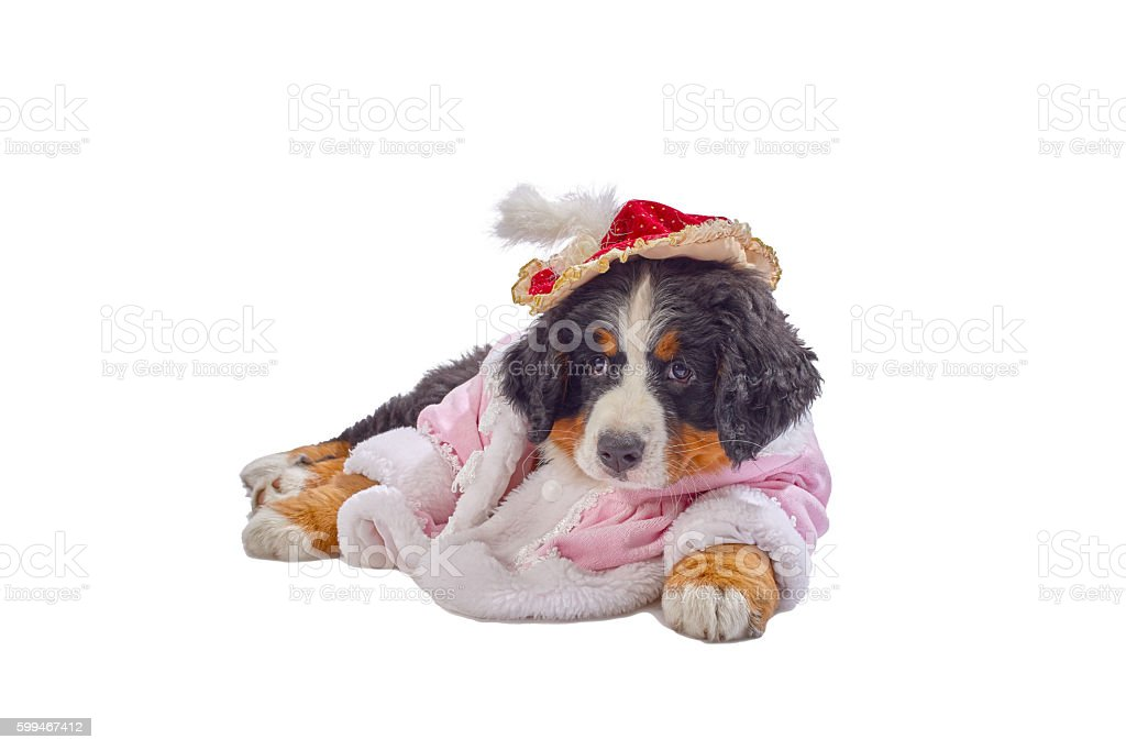 puppy in costume stock photo