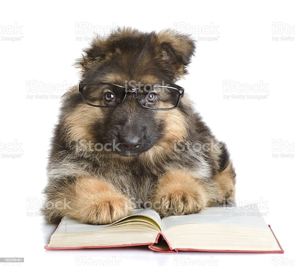 puppy in glasses read book royalty-free stock photo