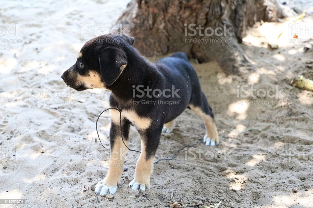Puppy in Namibia, Africa stock photo