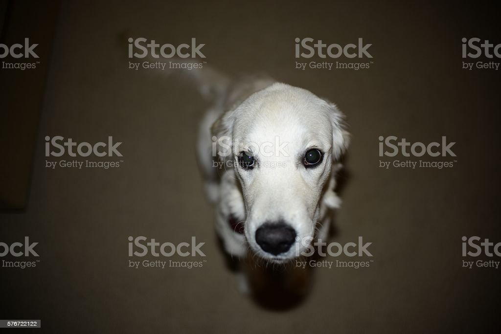 Puppy in Trouble stock photo