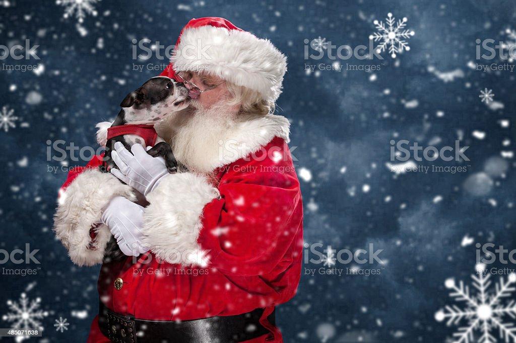 Puppy Licking Santa Claus' Face stock photo