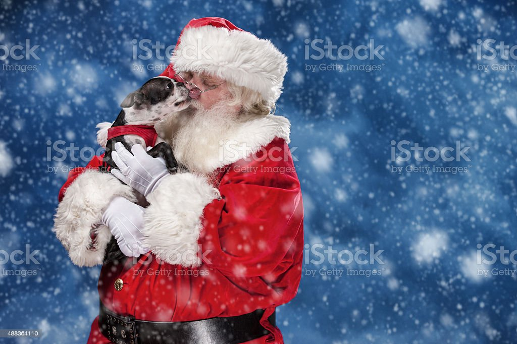 Puppy Licking the Face of Santa Claus stock photo