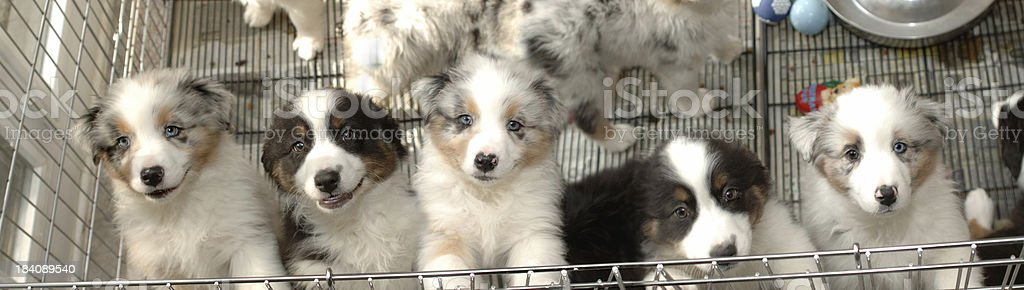 Puppy Line stock photo