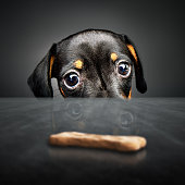 Puppy longing for a treat
