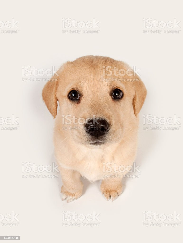 Puppy looking up stock photo