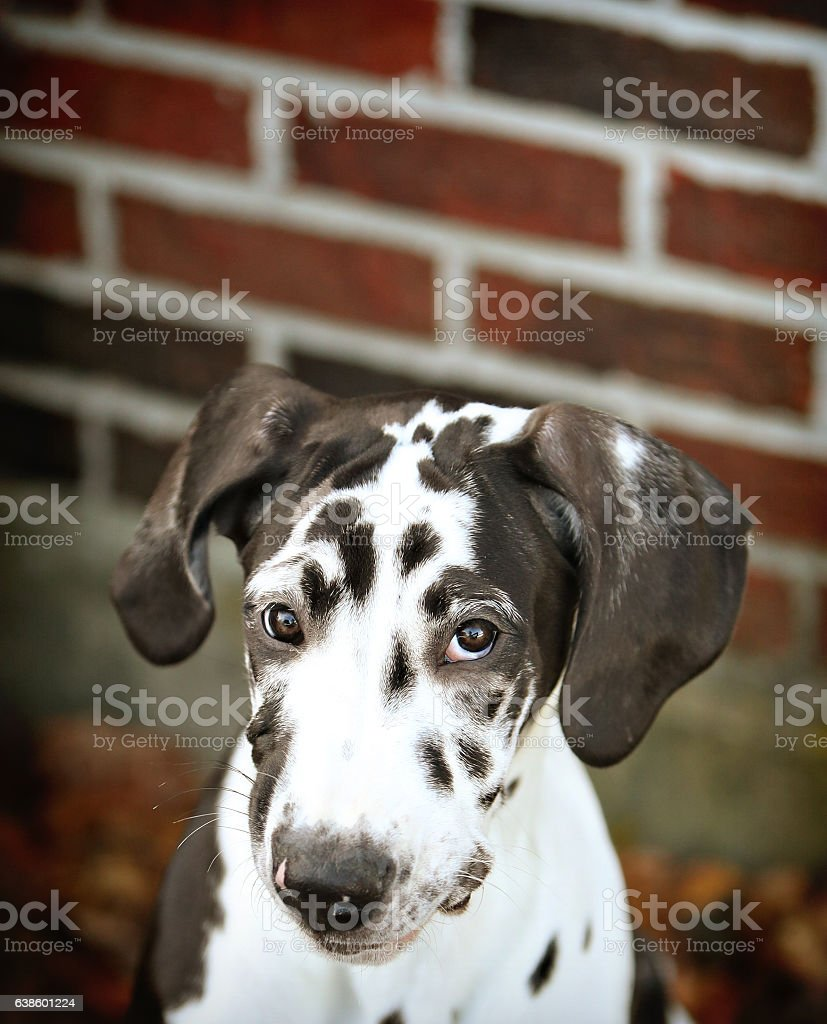 puppy love stock photo