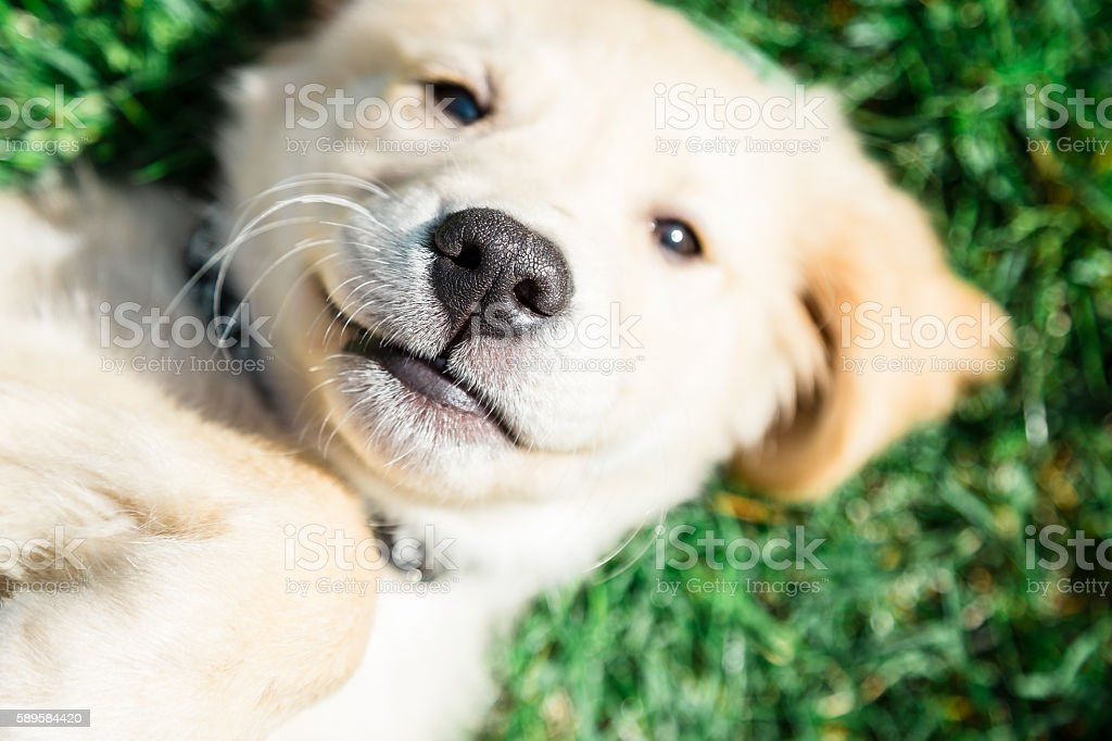 Puppy Nose stock photo