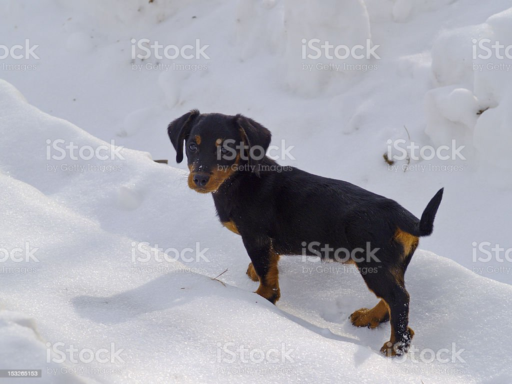 Puppy of a dog on snow-covered road stock photo