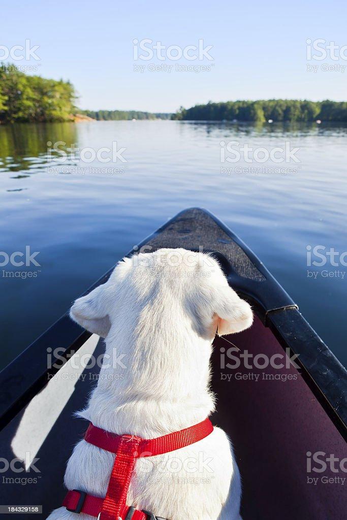 Puppy on a canoe stock photo