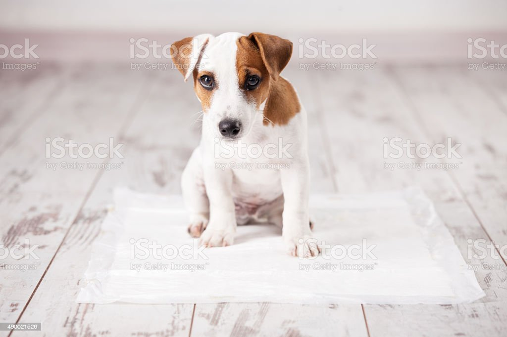 Puppy on absorbent litter stock photo