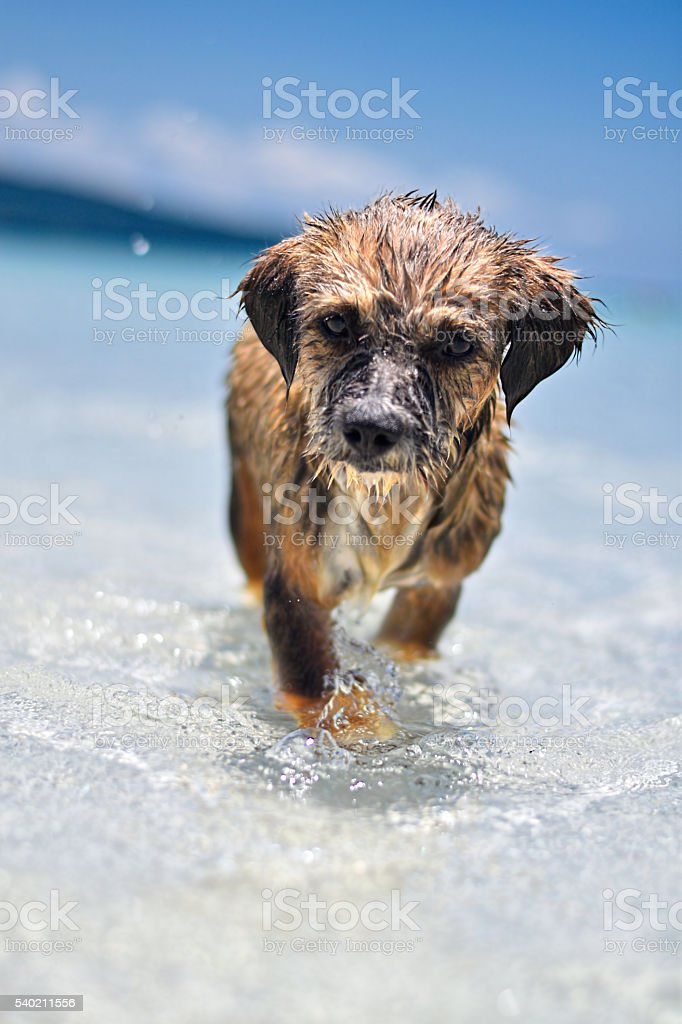 Puppy on the beach stock photo