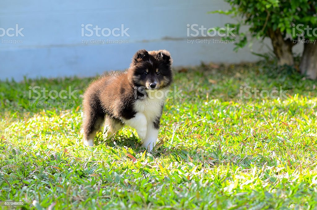 Puppy on the green grass. stock photo