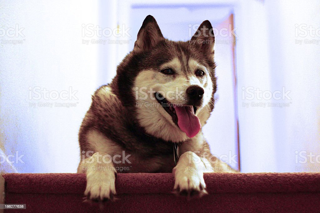 Puppy on Top stock photo