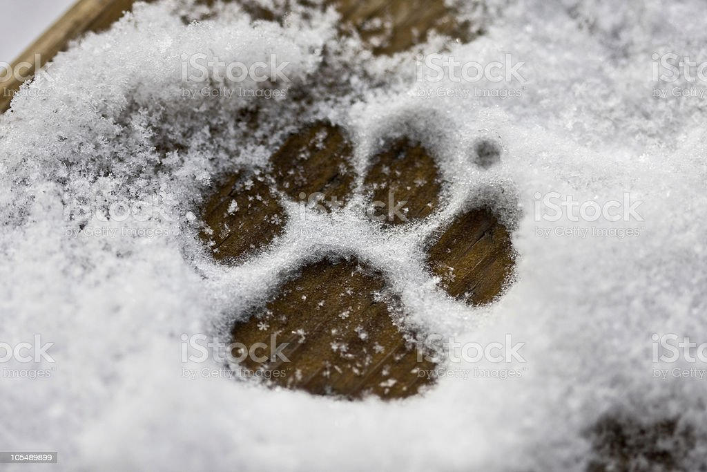 Puppy Paw in the Snow royalty-free stock photo