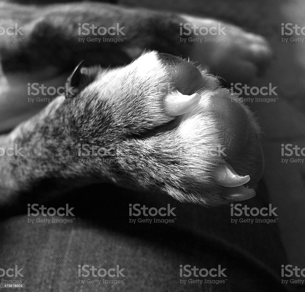 Puppy Paw stock photo