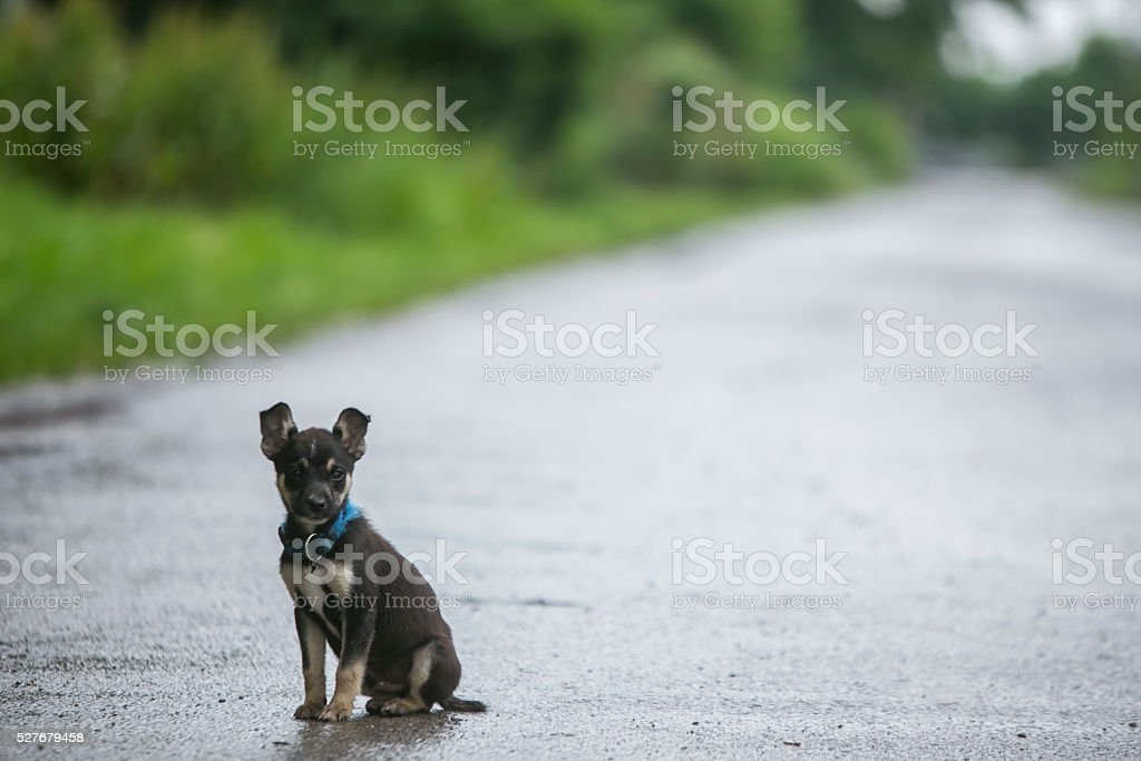 puppy stock photo
