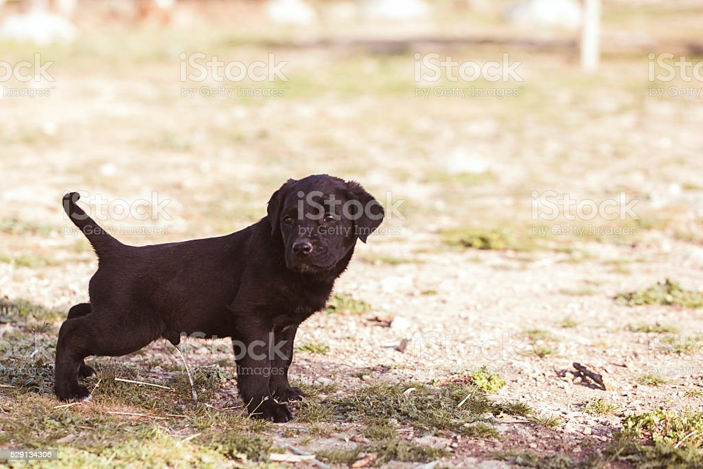 puppy pipi on the grass stock photo