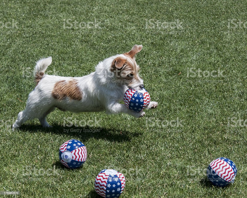 puppy playing with ball royalty-free stock photo