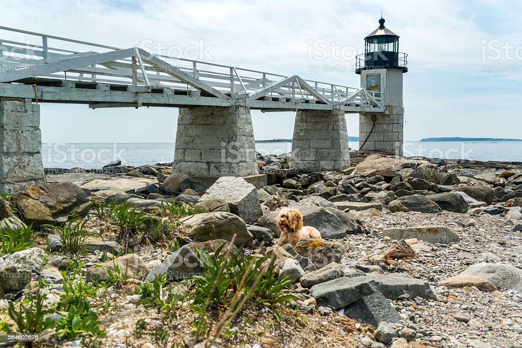 Puppy plays at Beach Lighhouse stock photo