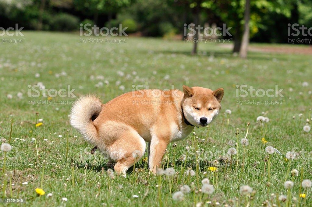 puppy poop stock photo