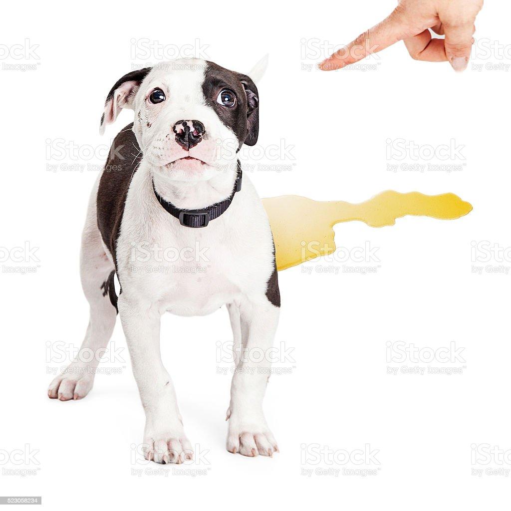 Puppy Potty Training Accident stock photo
