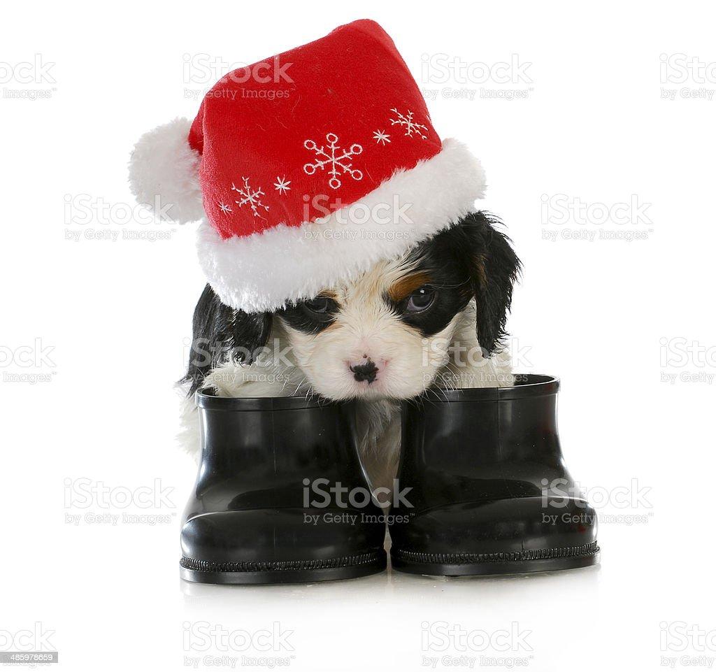 puppy santa stock photo