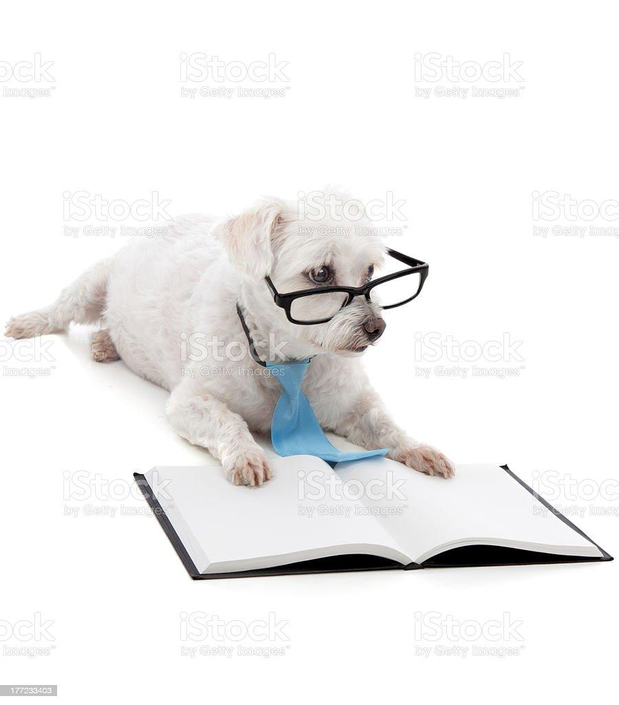 Puppy School stock photo