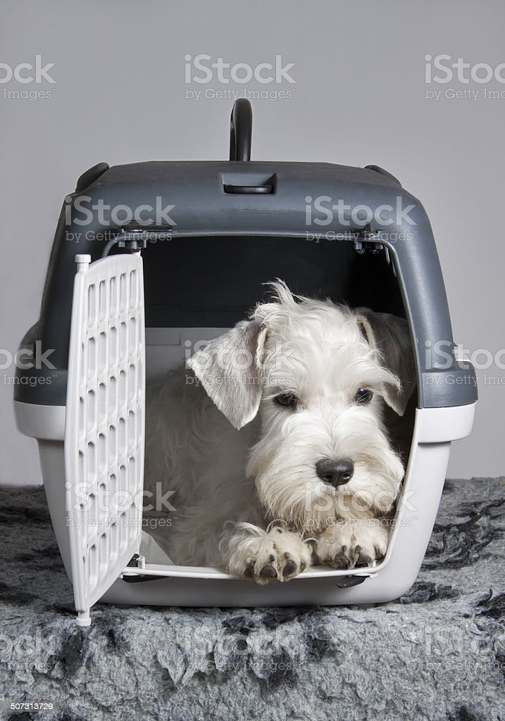 puppy sitting in his transporter pet carrier stock photo