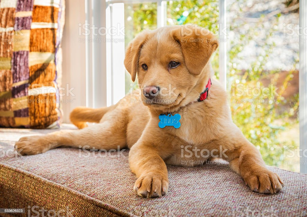 Puppy sitting in the window stock photo