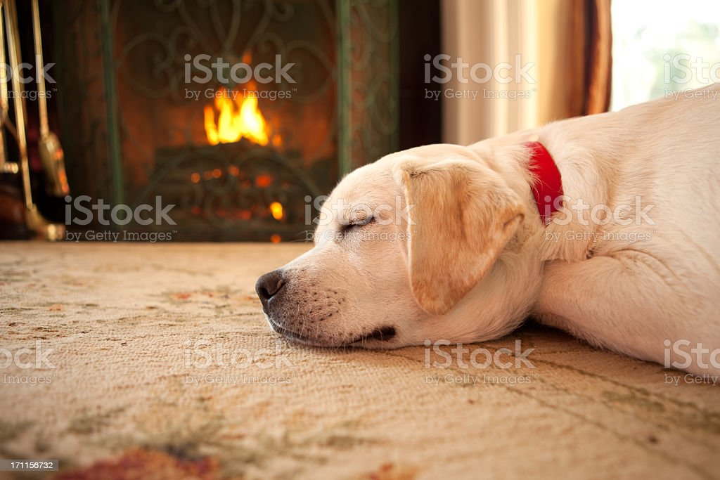 Puppy sleeping by a fireplace stock photo