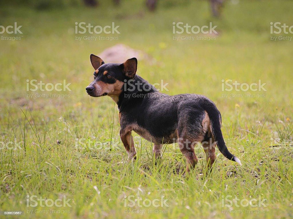Cachorro pie en el césped al aire libre foto de stock libre de derechos