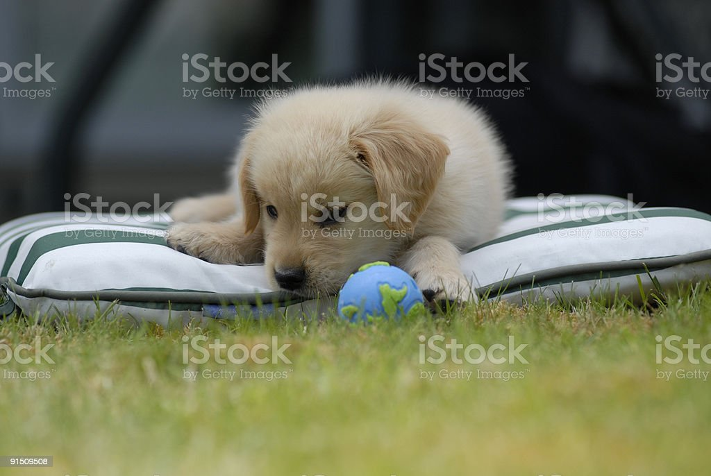Puppy stares at Earth shaped ball royalty-free stock photo
