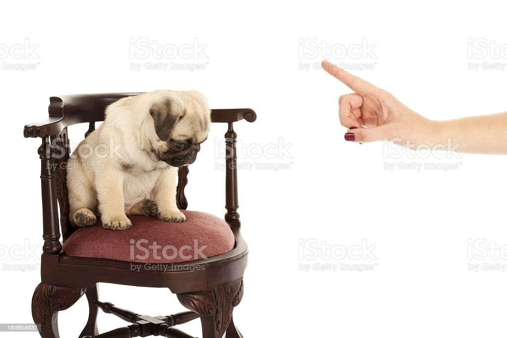 Puppy Time Out royalty-free stock photo