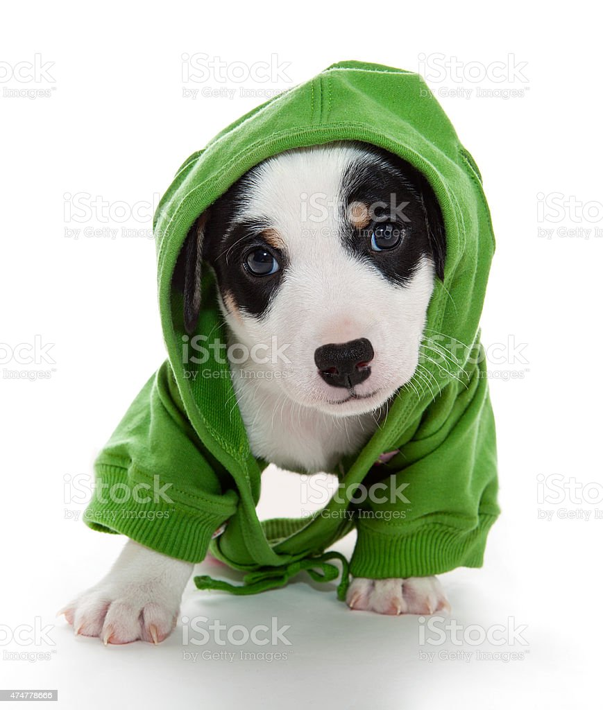 puppy T-shirt stock photo