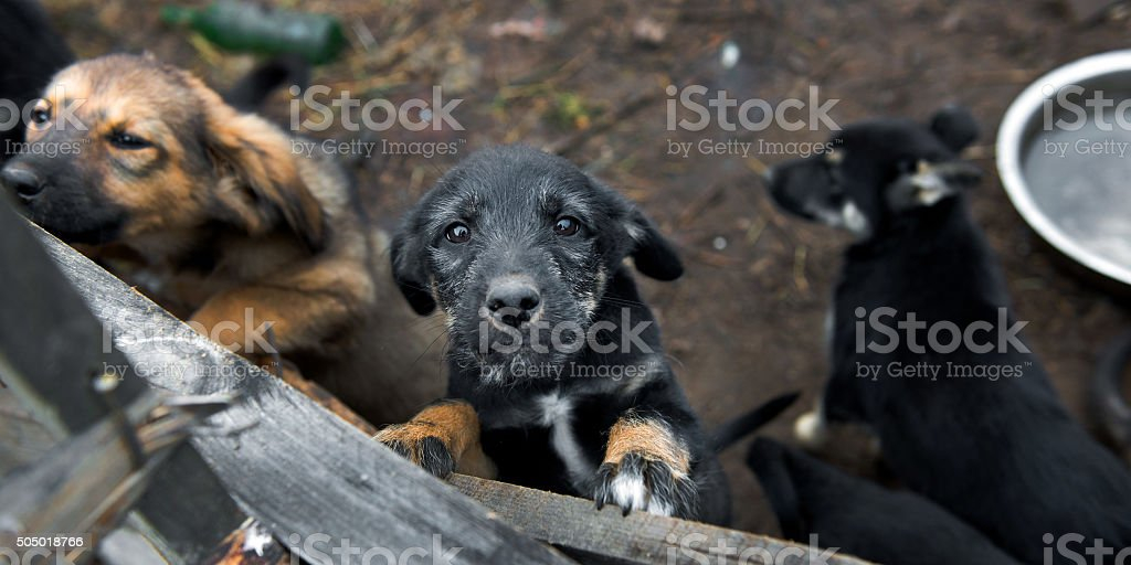 Puppy up for adoption stock photo