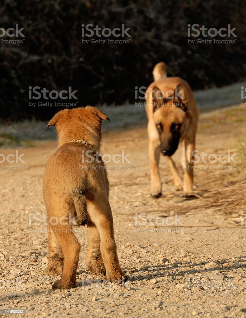 puppy waiting his mother stock photo